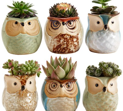A set of six 2.5-inch owl shaped ceramic flower pots. Ideal gift set for people who love to have a small plants close to them in cute pots.